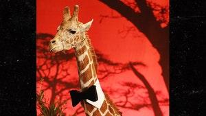 Stanley The Giraffe Seized As Evidence at Malibu Wine Safaris