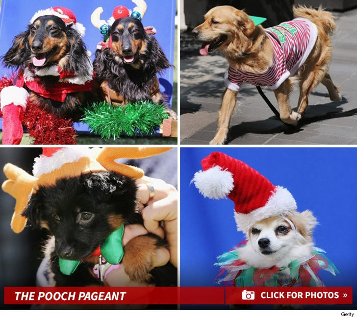Pooch Pageant -- Dogs Dress-Up for Competition