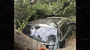 'Knight Rider's' Rebecca Holden and Record Producer Husband Joel  Diamond's Car Destroyed by Oak Tree