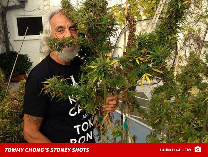 Tommy Chong's Stoney Shots