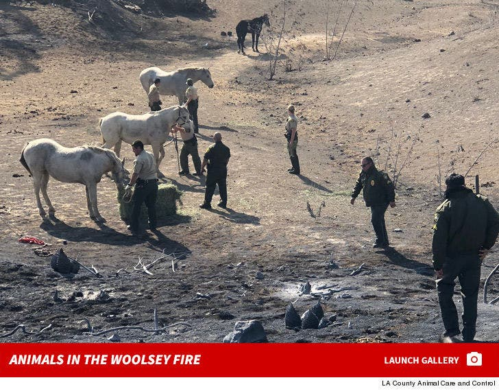 Animals in the Woolsey Fire