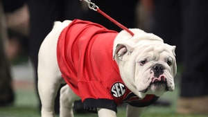 Georgia's Bulldog Mascot Uga X Won't Attend Games Due To COVID-19 Protocols