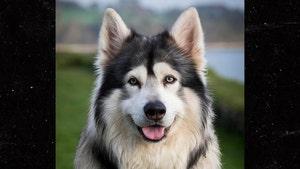 'Game of Thrones' Direwolf Dog, Odin, Dies from Cancer