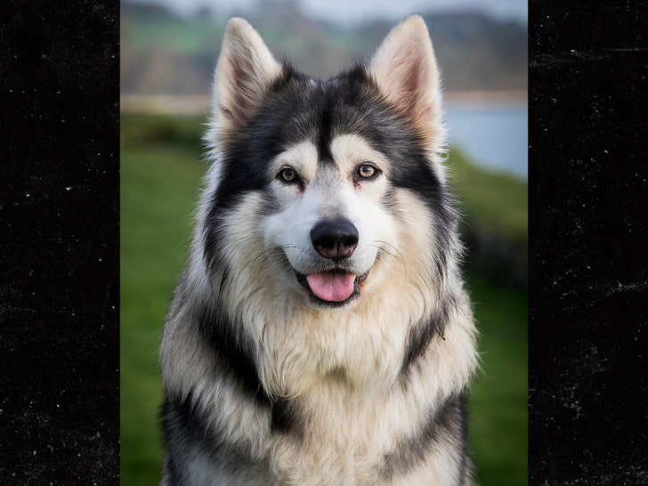 Dog from Game of Thrones cast dies
