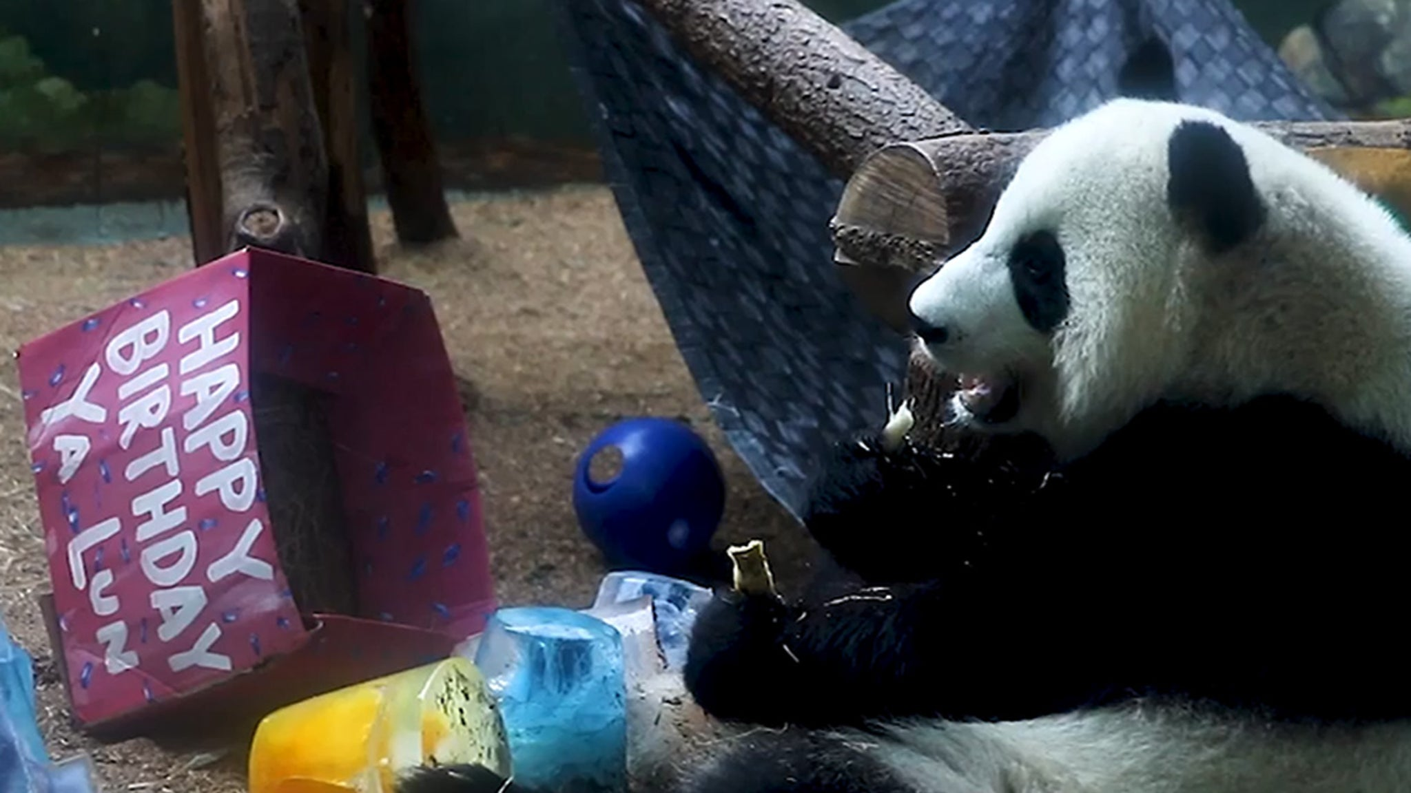 Giant Panda Twins 4th Birthday Party!!! Bear-ly Containin' Themselves