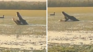 Huge Alligator Eats Duck on Florida Lake, Hunters Lose Out