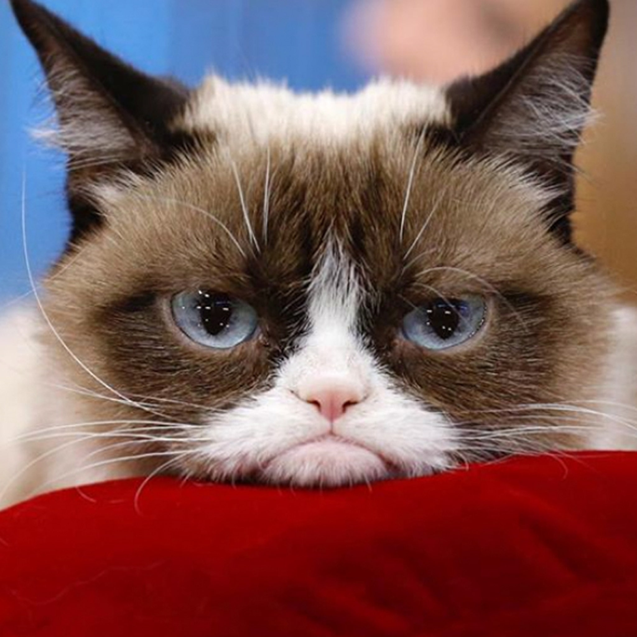 Grumpy Cat Sues Rip-off Companies for Copycat Merchandise