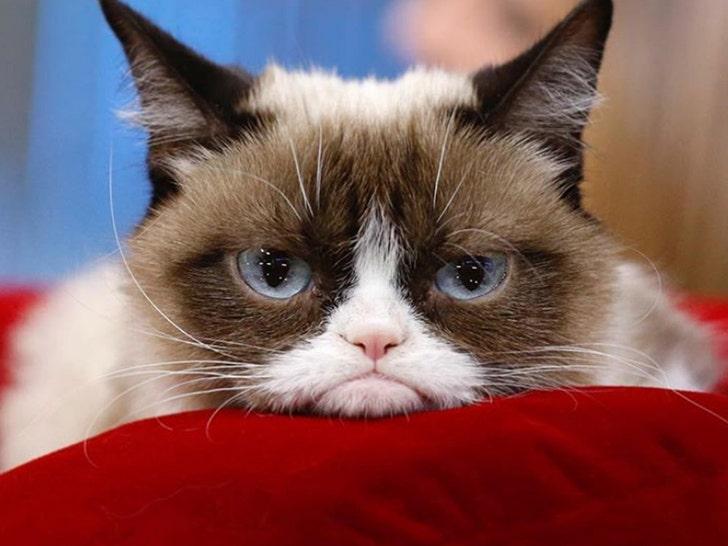 mèo bị bệnh viêm phổi