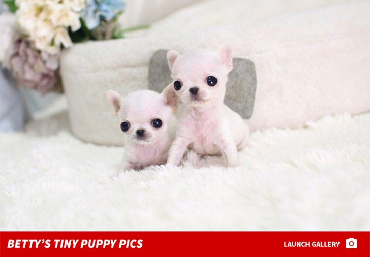 Betty's Teacup Puppies