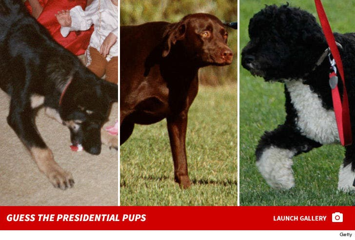 Presidential Pets -- Guess Whose Adorable Dogs!