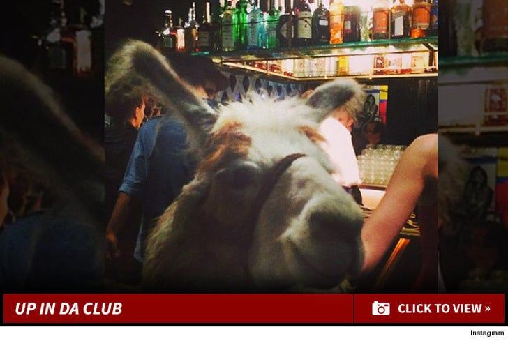 Llama Cop -- Up In Da Club