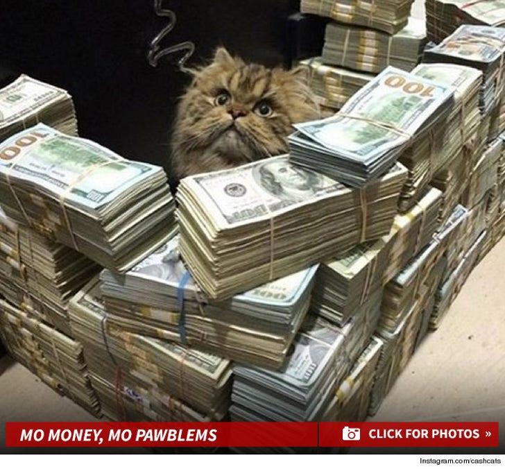 @CashCats -- Instagram's Fine-Livin' Felines