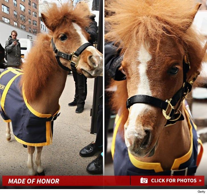 Police Pony on Patrol
