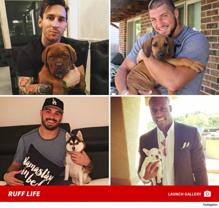 Big Athletes with Tiny Dogs