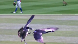 MLB Spring Training, Geese Attack Each Other In Outfield!