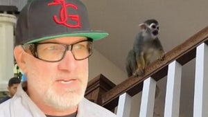 Jesse James' Pet Monkey Breaks into Neighbor's House, Gets Aroused