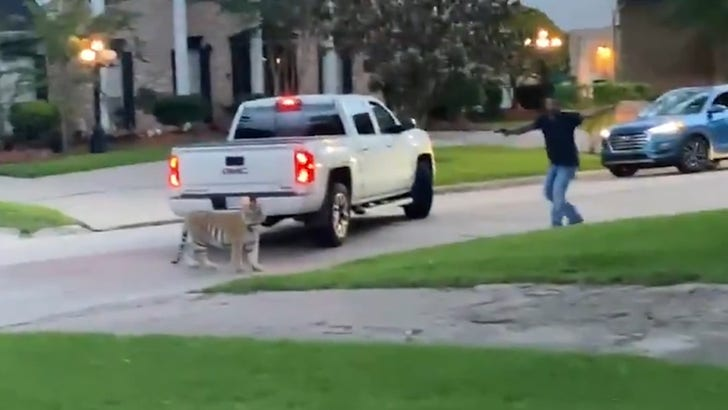Tiger in Houston Nearly Shot by Neighbor, Police Chase Ensued.jpg