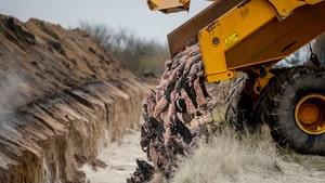 Denmark's 'Zombie Mink' Problem Bites Them, Carcasses to be Dug Up