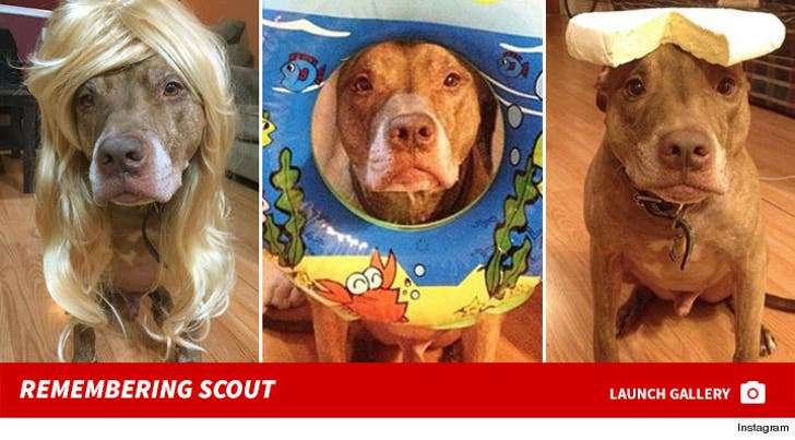 Remembering Scout