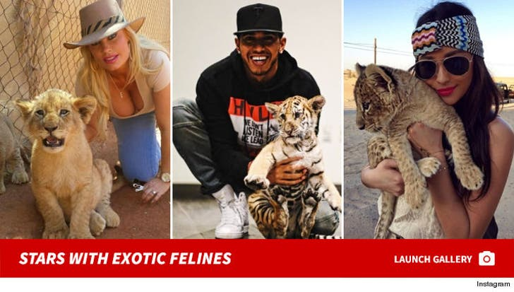 Stars With Exotic Cats