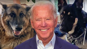 President Biden's Dogs Arrive at The White House