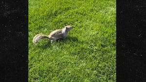 David Spade Auditions for TMZ Photog By Interviewing Squirrel