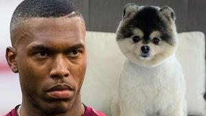 Soccer Star Daniel Sturridge Sued By Alleged Stolen Dog Hero, I Want My Reward Money!