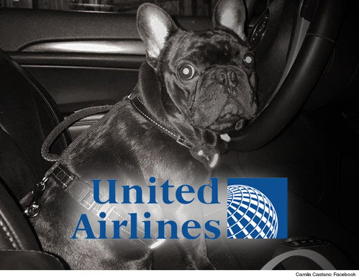 United Airlines Strikes Settlement Over Dog That Died in
