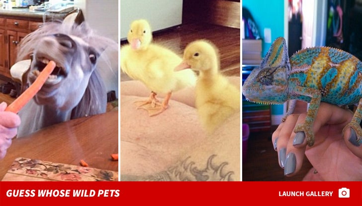 Guess Whose Outrageous Animals