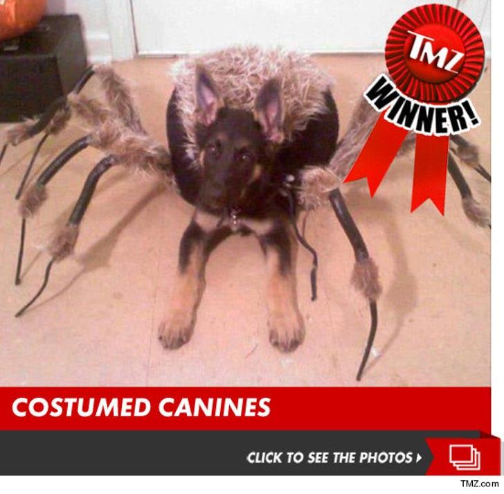 TMZ's Annual Doggie Costume Contest!!