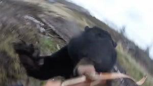 Viral Bear Attack Hunter Killed The Bear That Attacked Him (VIDEO)