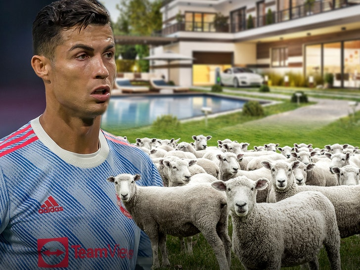 Cristiano Ronaldo Reportedly Moves Mansions Due To Baaing Sheep Waking Him Up.jpg