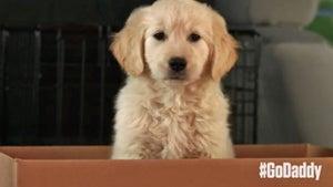 GoDaddy -- Pulls Super Bowl Spot ... Over Puppy Cruelty Backlash