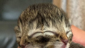 Two-Faced Kitten, Biscuits & Gravy, Dies Four Days After Birth