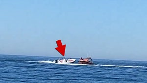 Dog in Out-of-Control Boat Rescued in Spain