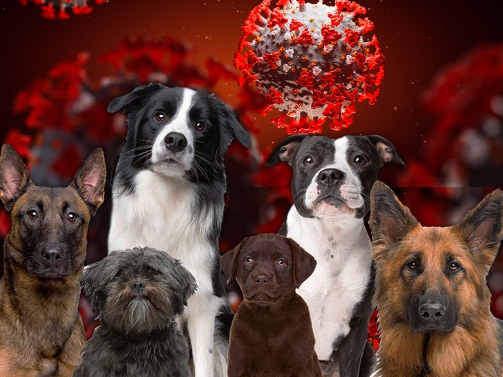 Second Dog Tests Positive for Coronavirus in Hong Kong - EpicNews