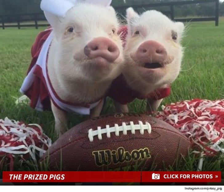 Instagram's Football Lovin' Porkers
