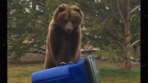 Grizzly Bear Gives Trash Can 'CPR,' Great Technique
