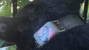 Trump 2020 Sticker Slapped on Black Bear, Animal Rights Group IDs Perp