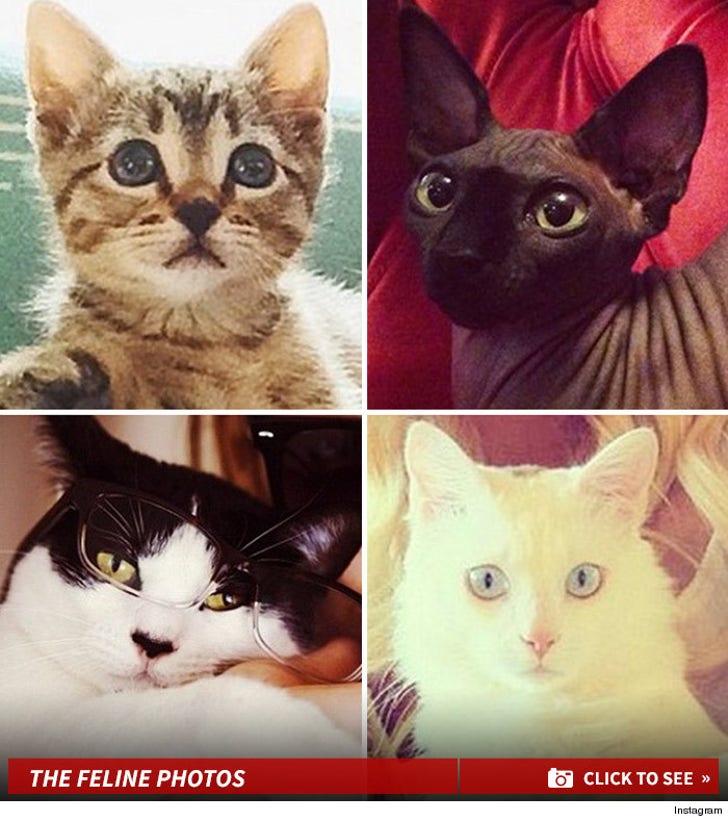 Guess Whose Feline Friends!