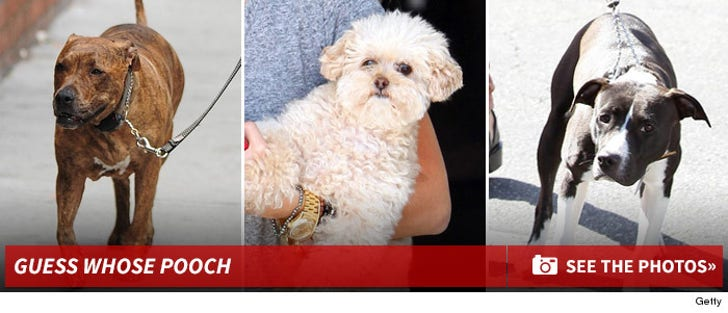 Dog Gone Adorable -- Guess Whose Pooch!
