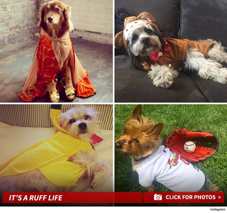 Celebrity Pooches -- Costumed Canines