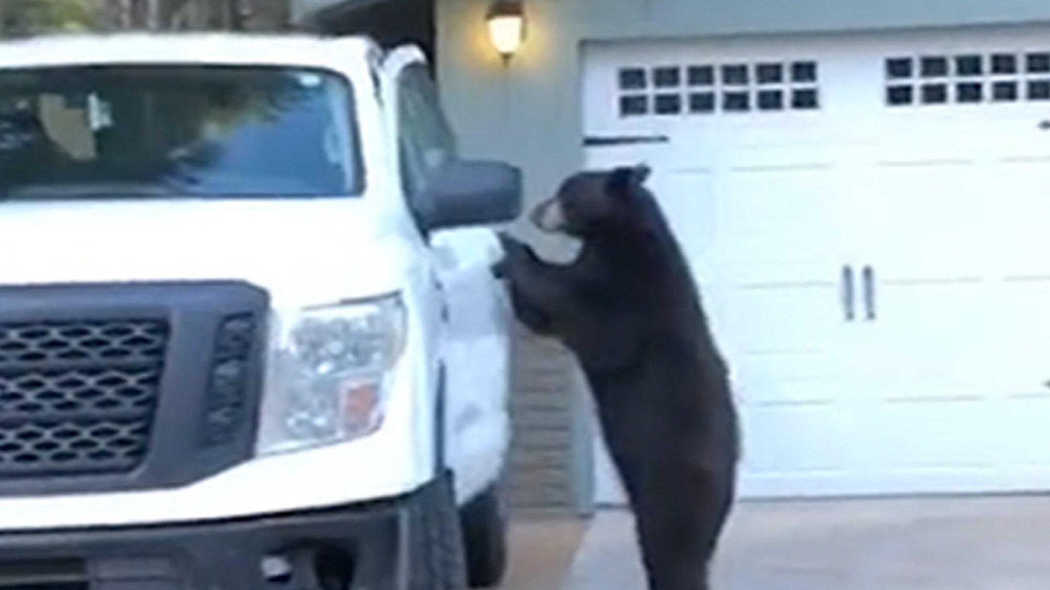 Wild Bear Ready to Roll in Pickup Truck ... Hops in, Locks the Door!!!
