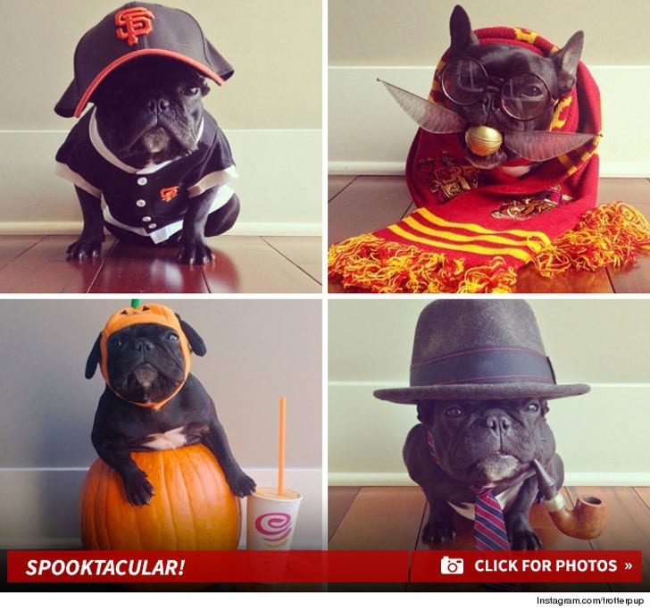 Trotter the Pup's Spooktacular Styles!