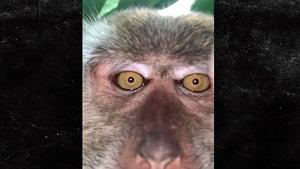 Monkey Steals Man's Phone, Snaps Selfies