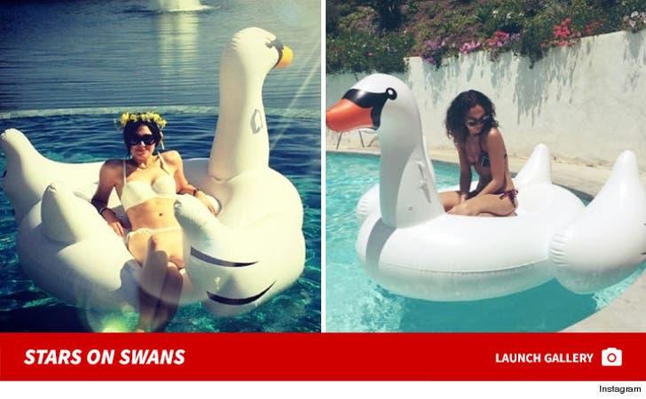 Stars on Swans