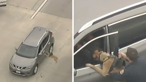 Police Dog Subdues Stolen Car Suspect on L.A. Freeway