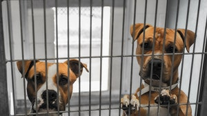 Australian Rescue Dogs Reportedly Shot Dead at Pound Over COVID Fears
