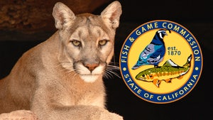 CA to Vote on Protecting Mountain Lions, 'Tiger King' Likely to Have Pull