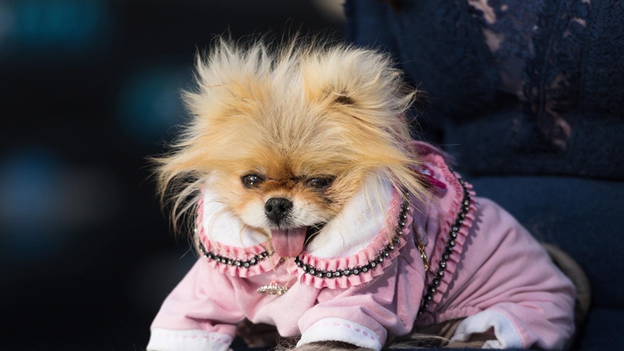 <p>Lisa Vanderpump's Dog Giggy Dies thumbnail
